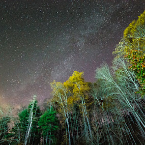 Reach for the Stars by Greg Booher - Landscapes Starscapes