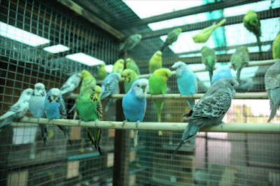 Budgies give wheelchair wings