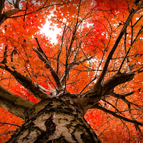 Ants Eye View by RomanDA Photography - Nature Up Close Trees & Bushes ( sky, red, autumn, green, colors, fall, trees, leaves,  )
