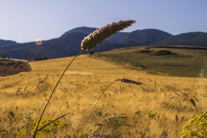 Wheat and Sky di cristiandragophoto