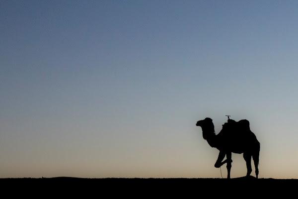 soul of Sahara