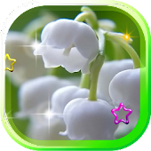 Lily of May live wallpaper