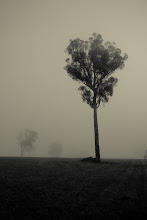 Photo: Misty morning in the south west