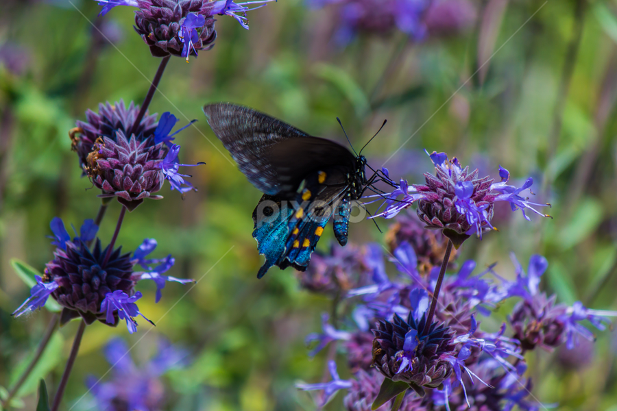 Butterflies are like Flowers with Wings by John Rogers - Animals Insects & Spiders ( butterfly, nature, california, yreka, insect, animal )