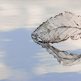 Una foglia....in Paradiso? by Mariateresa Toledo - Artistic Objects Still Life ( foglia, cielo, leaf, riflesso,  )