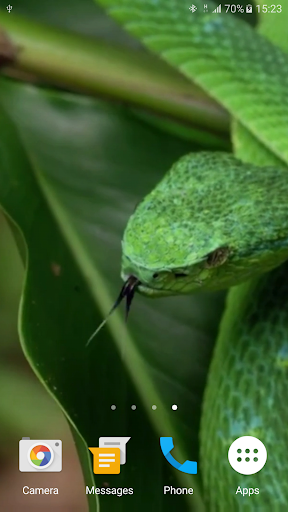 Snake Live Wallpaper - Apps on Google Play