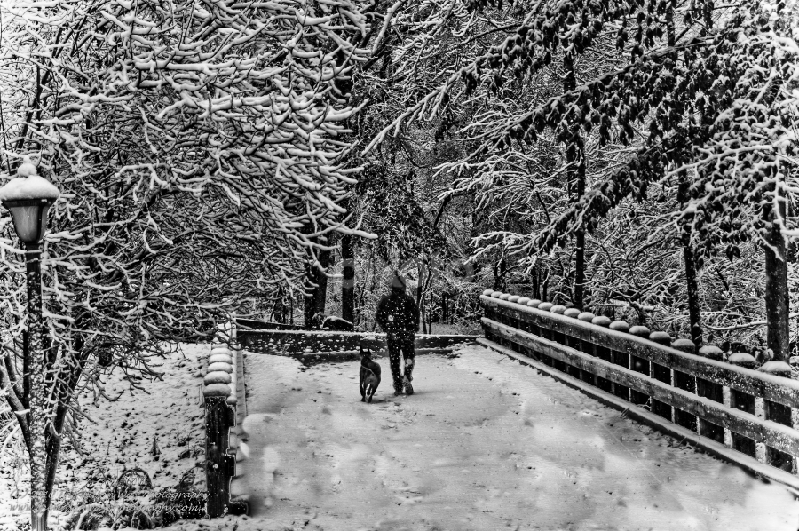 Man and his dog by Myra Brizendine Wilson - Landscapes Weather ( bridge with snow, snow, trees, bridge, dog, man, trees with snow,  )