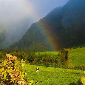 Rainbows in Mountains by Anita Atta - Landscapes Weather ( mountains, pasture, hydrangea, rainbow, flower,  )