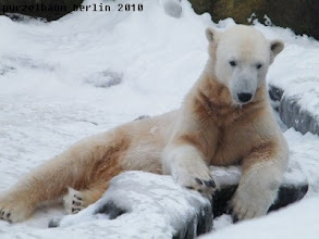 Photo: Knut wuenscht einen Guten Morgen :-)