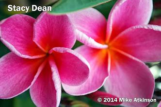 Photo: Stacy Dean - San Diego, CA - East San Diego county