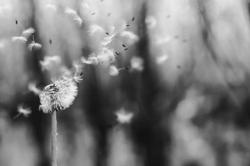 Via col vento di alexei