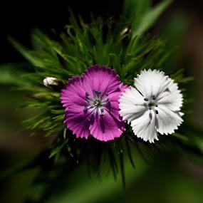 by Aaron Ytterberg - Flowers Flower Gardens (  )