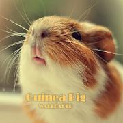 Guinea Pig Animal Wallpaper