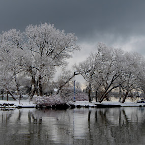 Wintry Reflections by Ronnie Caplan - Landscapes Waterscapes ( clouds, water, winter, snow, dark, trees, reflections, lake, menacing, dock, branches, gloomy,  )