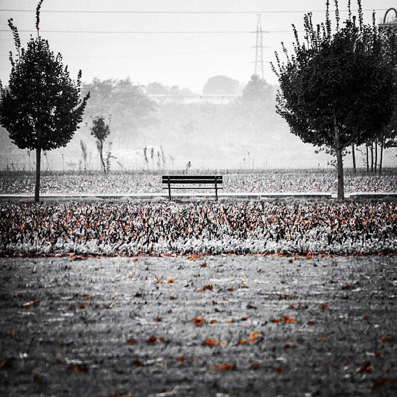 Alone in autumn  di marco_stifanelli