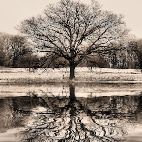 Reflections of Lone Tree by Shelly B. - Landscapes Waterscapes