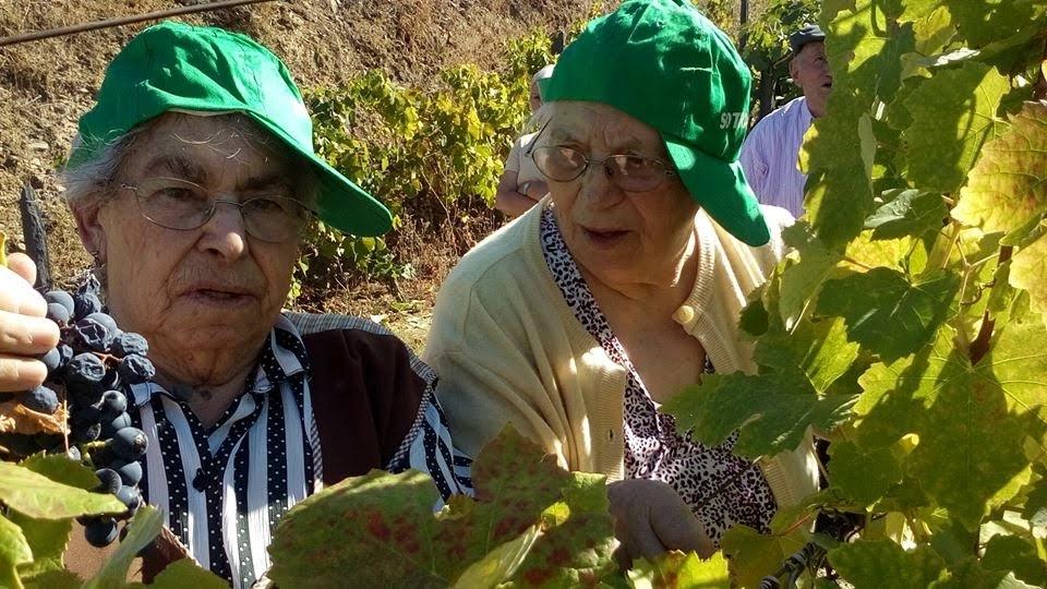 Idosos do Lar de Arneirós recriam vindimas na Quinta de Lobrigos