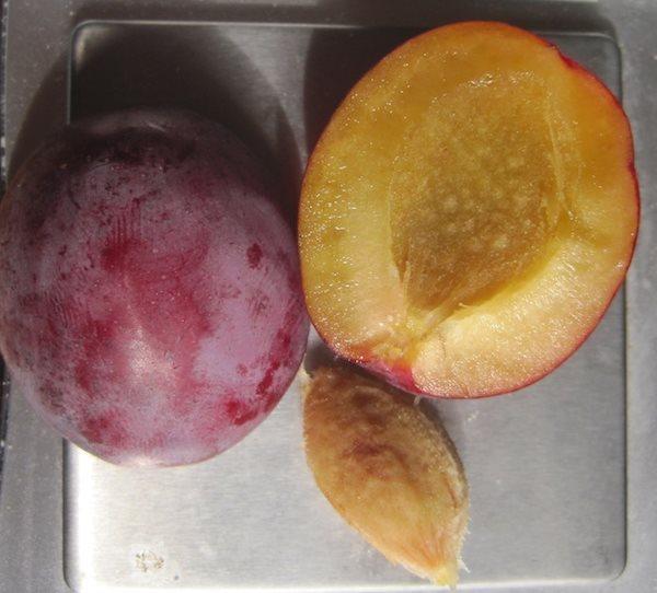 Мякоть и косточка плода сливы сорта Скороспелка Красная крупным планом