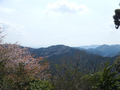 山桜と喜桜山