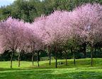 Blossom in the Villa Borghese Park