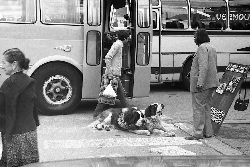 fotografatevi con il cane san bernardo ! di rino_savastano