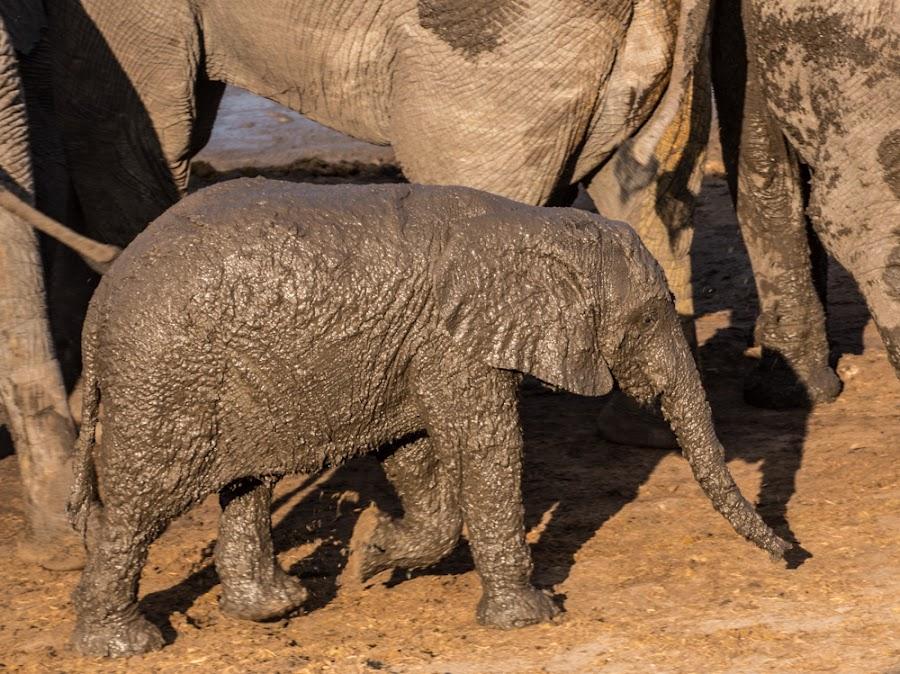 Just had my mud bath by Mariana Visser - Animals Other Mammals