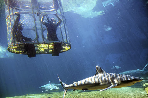 Unlike open-water shark cage diving, uShaka does not chum.