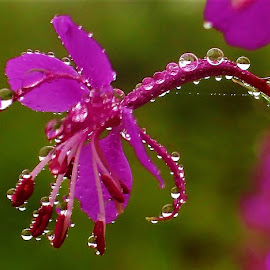 by Frank Gray - Nature Up Close Natural Waterdrops