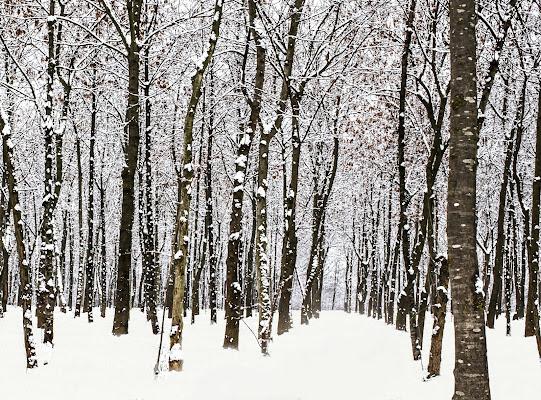 Prima nevicata di natalia_bondarenko