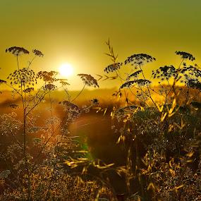 Daybreak by Fokion Zissiadis - Nature Up Close Leaves & Grasses ( sunrise sani wheat fields landscape nature sani wheat fields, , Hope, golden hour, sunset, sunrise )