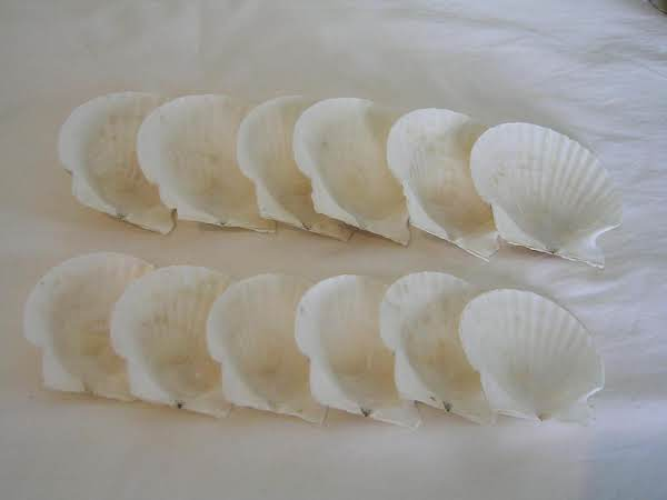My Scallop Shell Collection.