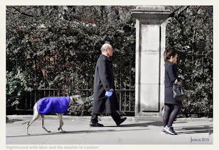 Photo: Sighthound with blue and his master in London