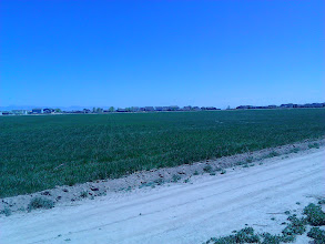 Photo: Grass in the farmland between subdivisions.