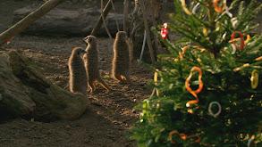 Bear-y Christmas! thumbnail