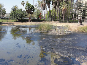 Photo: La Brea Tar Pits, where the vibrant economy of Los Angeles began back in 1910 and supposedly favorite location for animals of the pleistocene