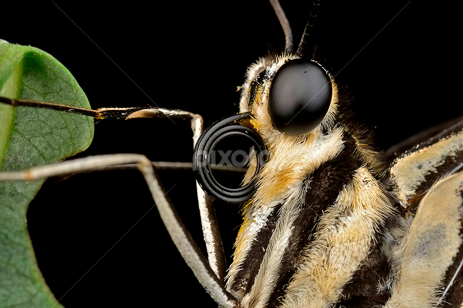 by Donald Jusa - Animals Insects & Spiders ( macro, insects )