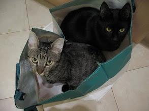 Photo: Zwei in eine Boot, ähm Tasche