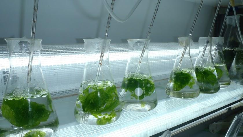 Los investigadores se centran en el futuro de la agroalimentación.