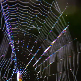 by Michael Haagen - Abstract Patterns ( spider web, refraction, spiral, spider, weave,  )