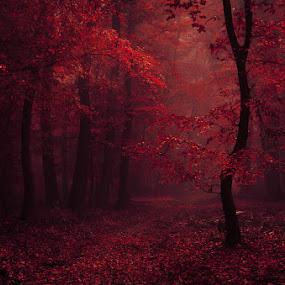 20171021-DSC_2701 by Zsolt Zsigmond - Landscapes Deserts ( red, autumn, foliage, fall, dark, forest, leaves, light )
