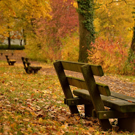 Rest in Series by Abhinav Ganorkar - City,  Street & Park  City Parks ( bench, park bench, autumn colors, autumn leaves, autumn,  )