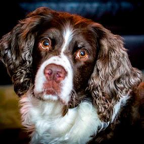 Lucy's Portrait by Anthony Balzarini - Animals - Dogs Portraits ( #dog #dogphoto #animalphoto #dogportrait #mansbestfriend,  )