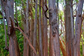 Photo: Trees.