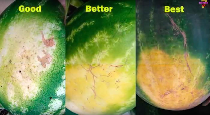 watermelon field spot comparison