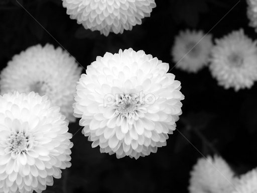 Centre Of Attention Flowers 2011 2013 Nature Up Close Pixoto