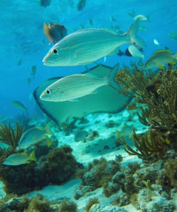 Mergulho Ilhas Cayman