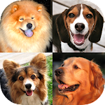 Dogs Quiz: Guess Breeds Photos Icon