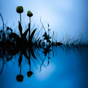 by Eden Meyer - Flowers Flower Gardens ( sky, reflections, flowers, garden )