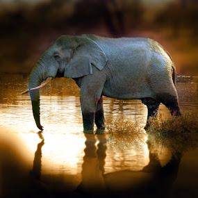 none by Elli Kraizberg - Animals Other Mammals (  )