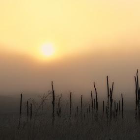 Foggy morning  by Lisa Kidd - Landscapes Weather ( fog, cattails, sunrise )